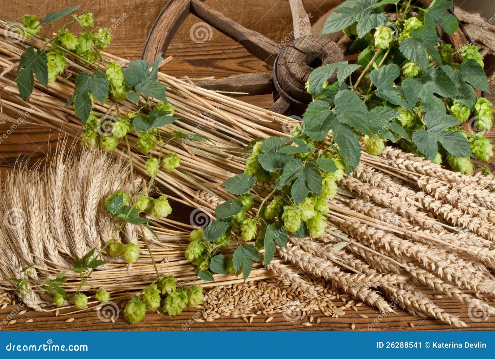 Wheat Plant Vector