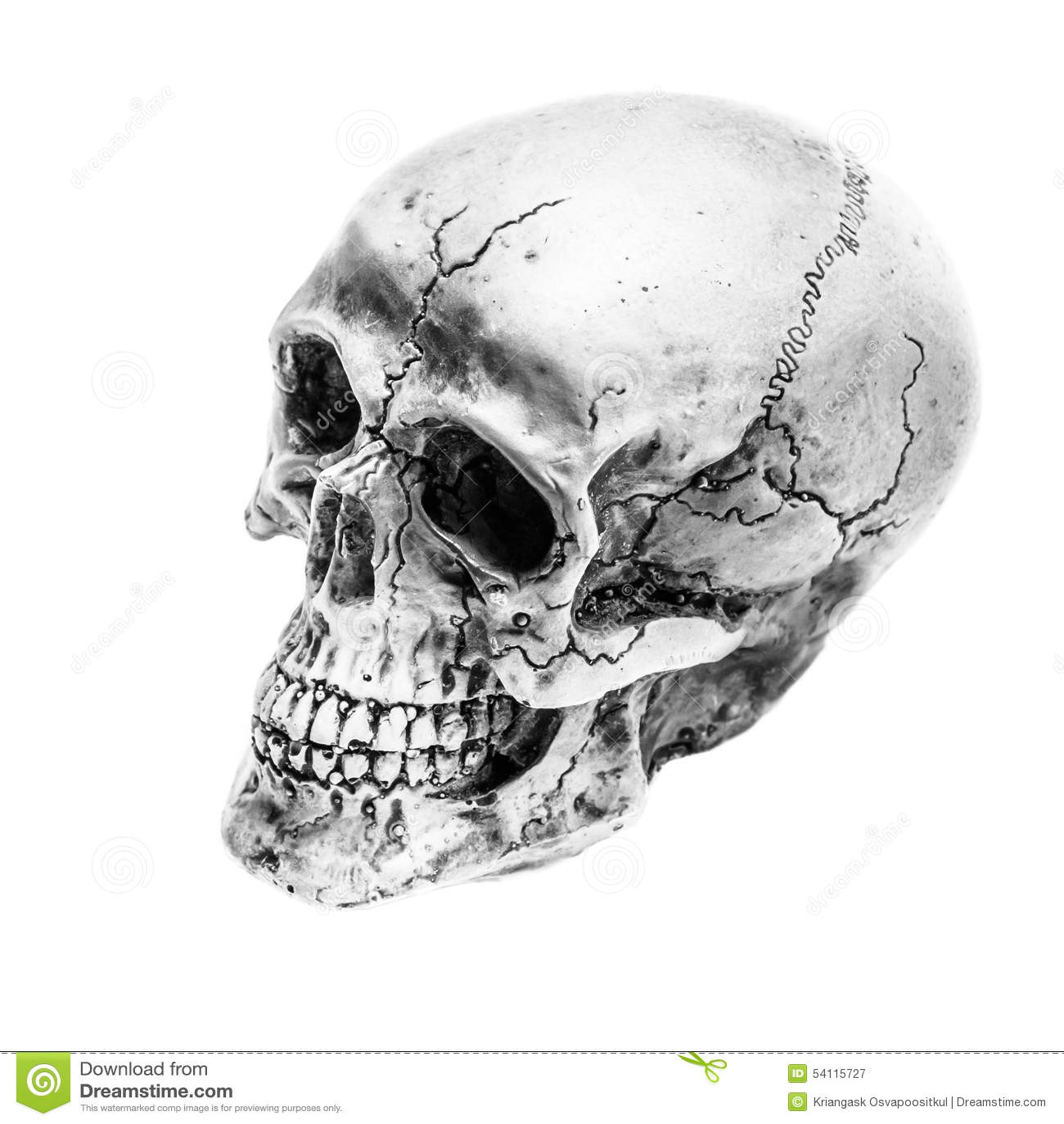 Still Lifeblack And White Of Human Skull On White Background A