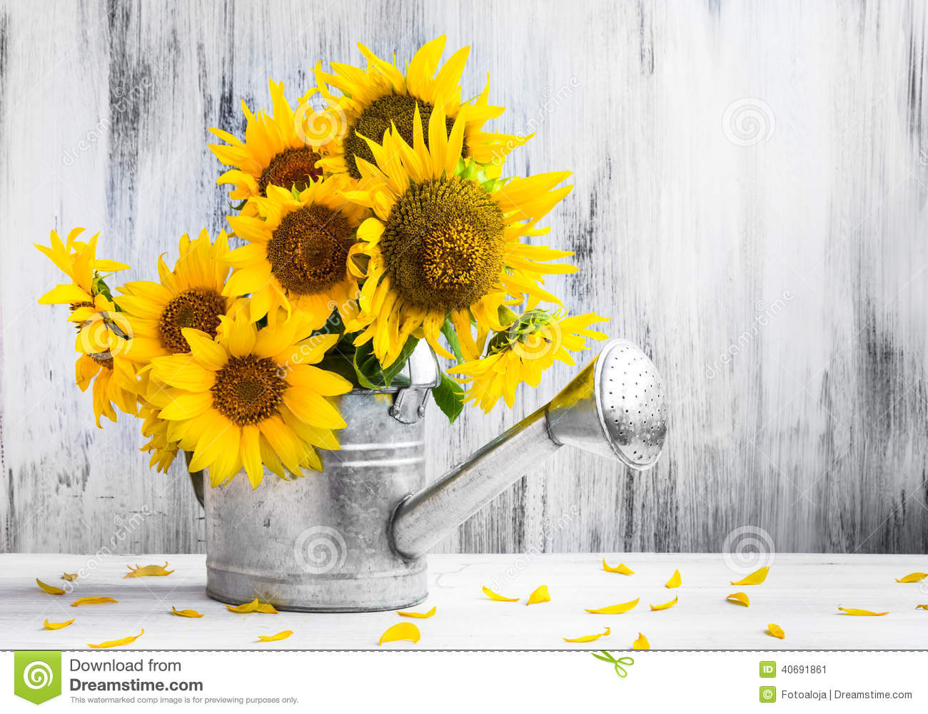 Still Life Bouquet Sunflowers Watering Can Stock Photo ...