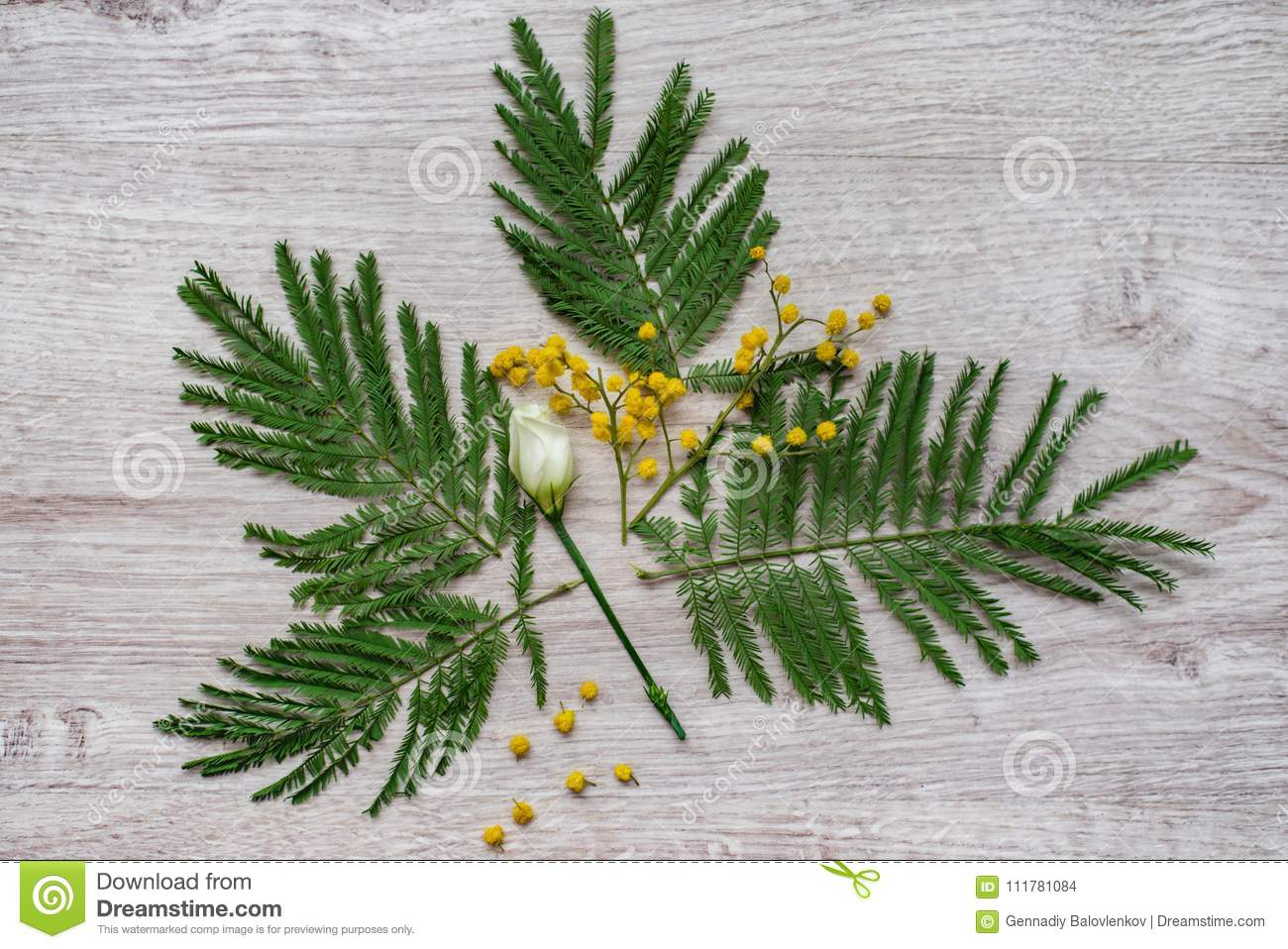 Still-life floral decorative design flower composition made from mimosas on a wooden background.