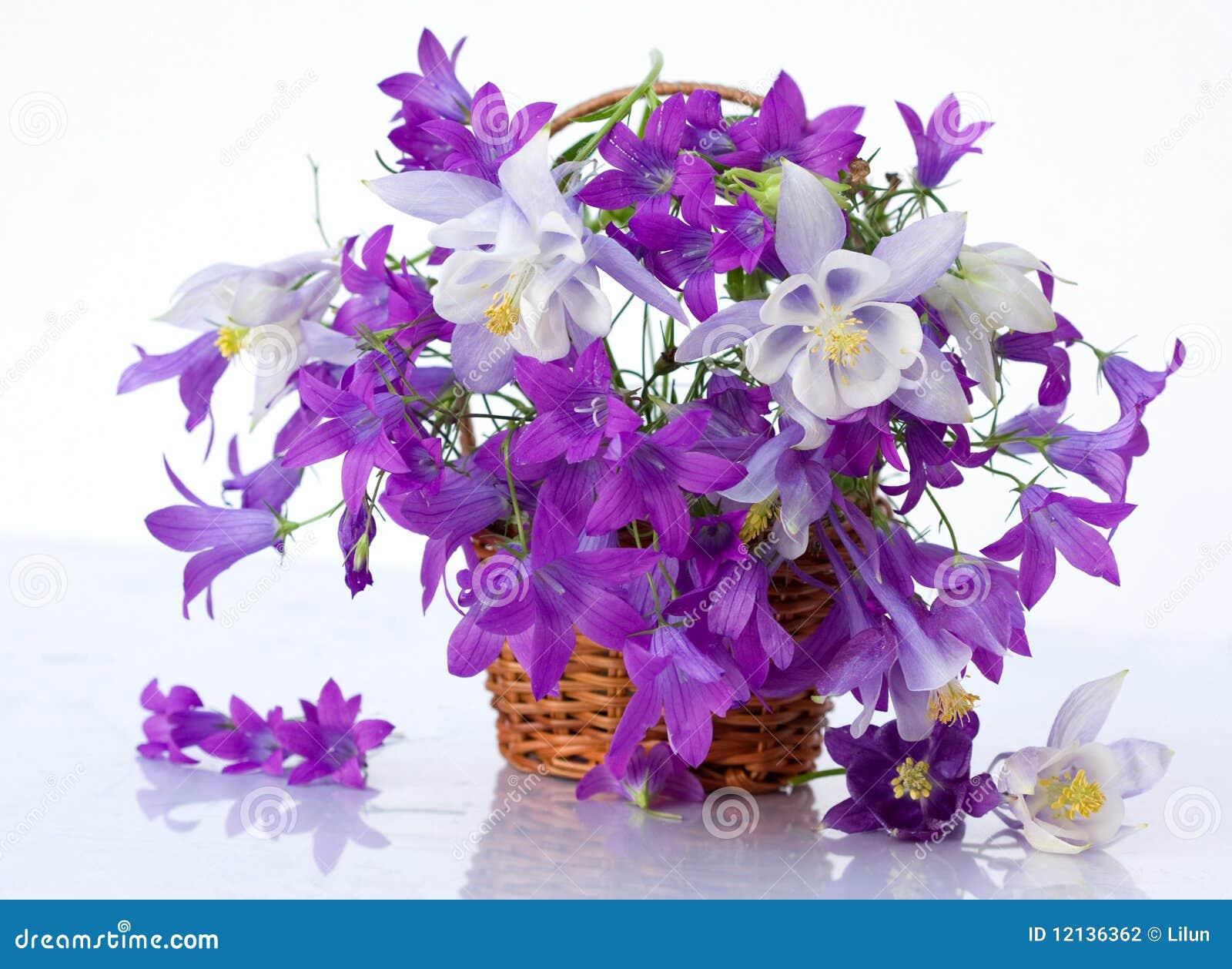 Still life flowers peonies beauty stock photos 478 images still life with flowers peonies beauty bouquet of flowers purple bells aquilegia and white izmirmasajfo