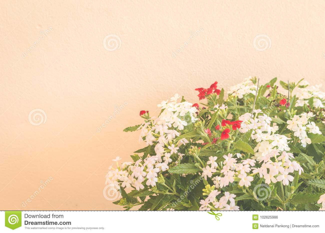 Still Life With Flowers On Wall Background Stock Photo - Image of ...