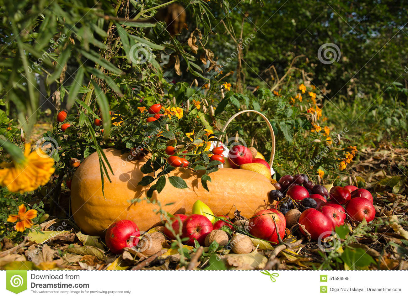 Still life of fruit and vegetables in the garden stock for Fruit and vegetable garden