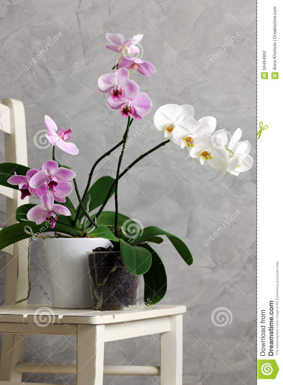 Still Life With Orchids Stock Photo Image Of Beautiful