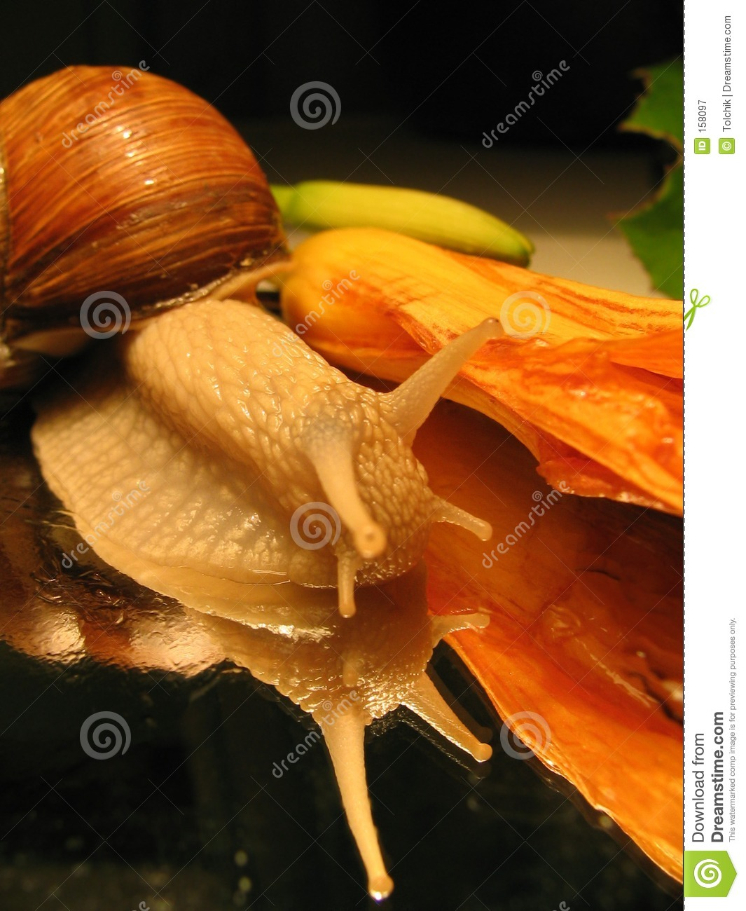 Still-life with a snail
