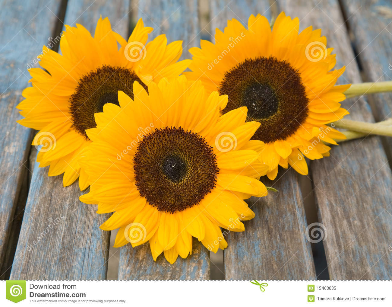 Download Still Life With Sunflowers Set Outside Stock Image