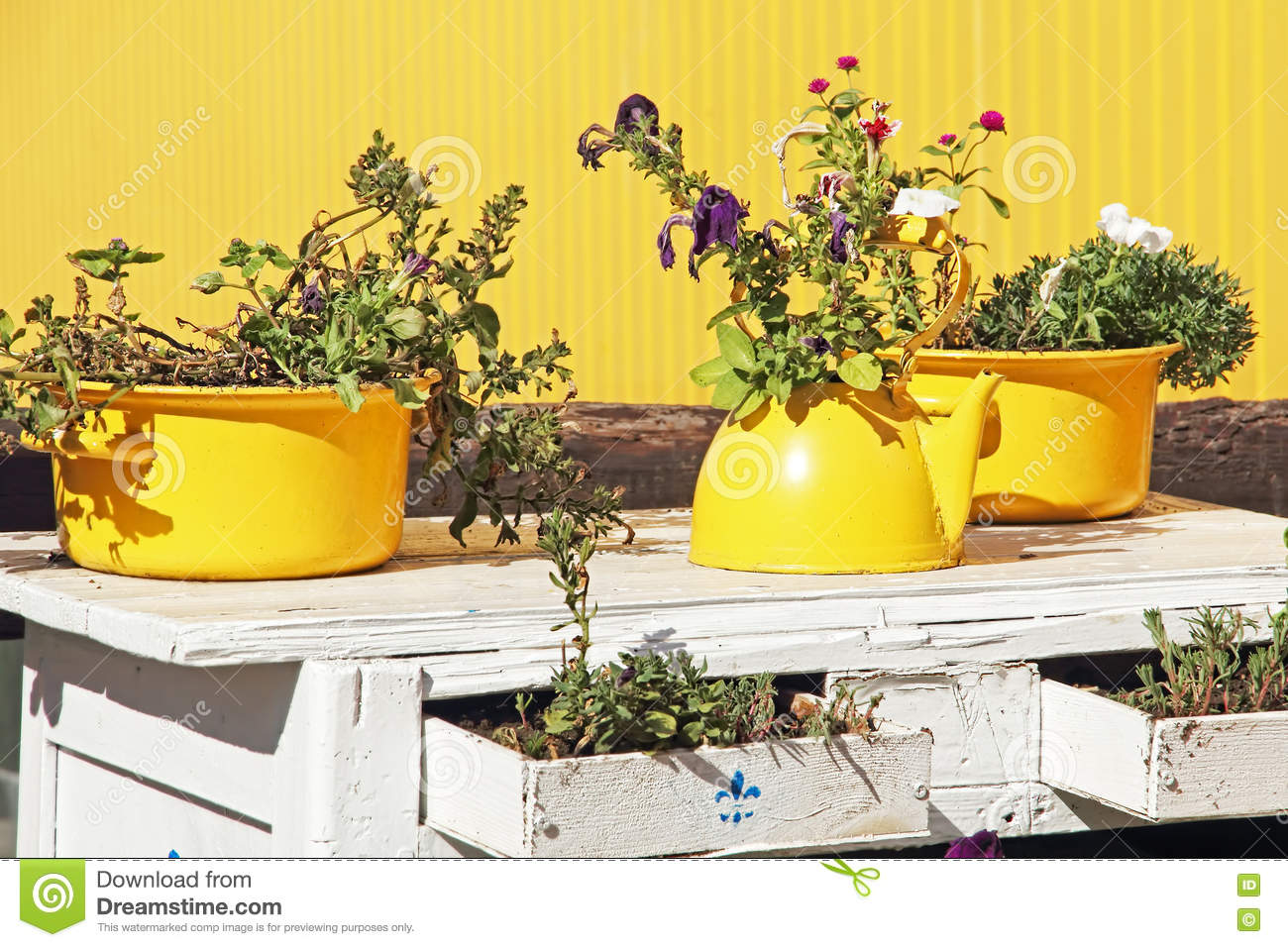 Still life in yellow colors in old yellow teapot and cas still life in yellow colors in old yellow teapot and cas dhlflorist Image collections