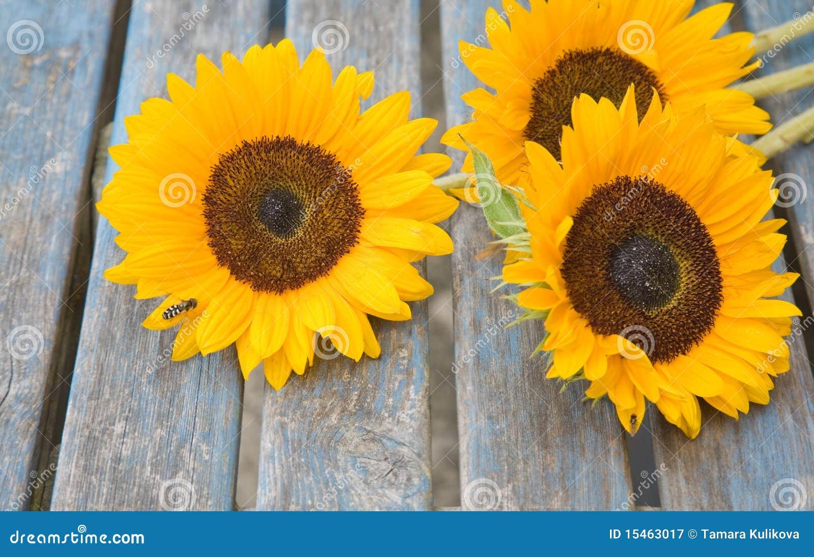 Stilleven Met Buiten Geplaatste Zonnebloemen Stock Afbeelding