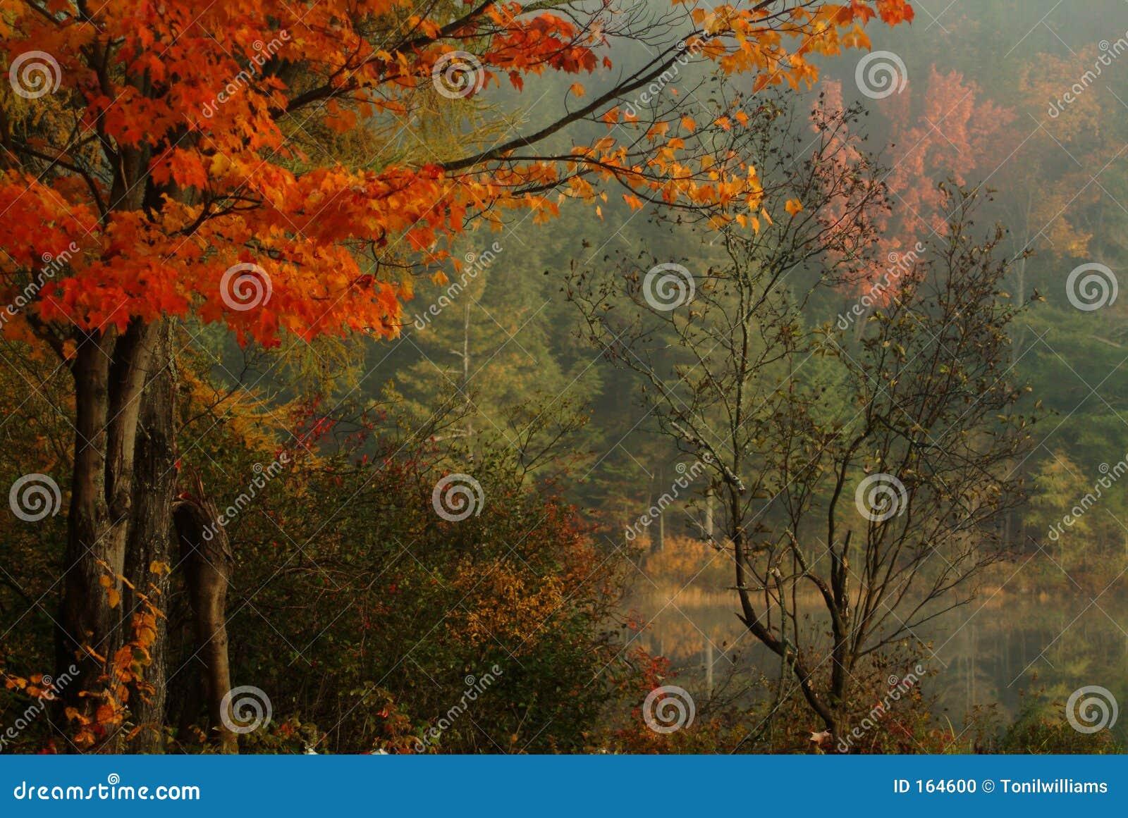 Stillness of Fall