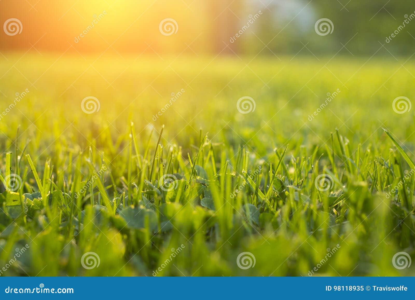 Stillsamt nytt gräs på gräsmatta för orange solnedgång
