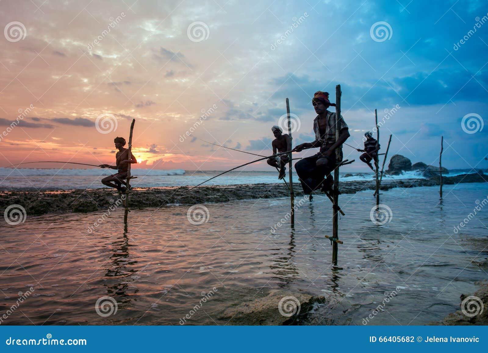 Stilt fisherman in koggala sri lanka editorial for Fishing in november