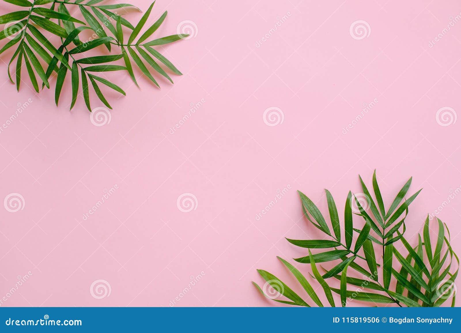 Stilvolle Sommerebenenlage neue Palmblattgrenze auf rosa backgr