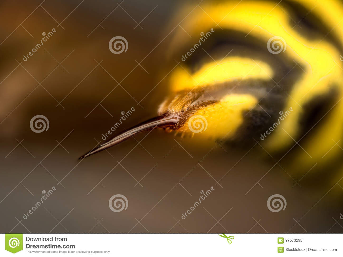 Sting of wasp