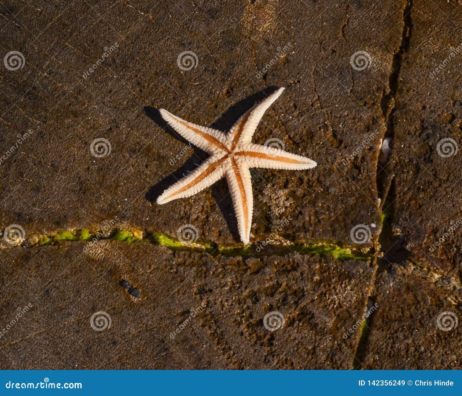 Stjärnafisk i solen