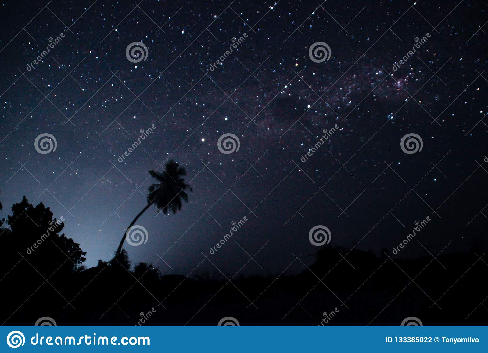 Stjärnklar himmel för natt med många stjärnor och översikterna av palmträd