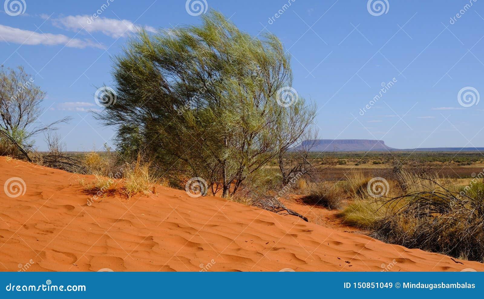 Stołowy wierzchołek halny Conner w odludziu na horyzoncie, słoneczny dzień w terytorium północnym Australia