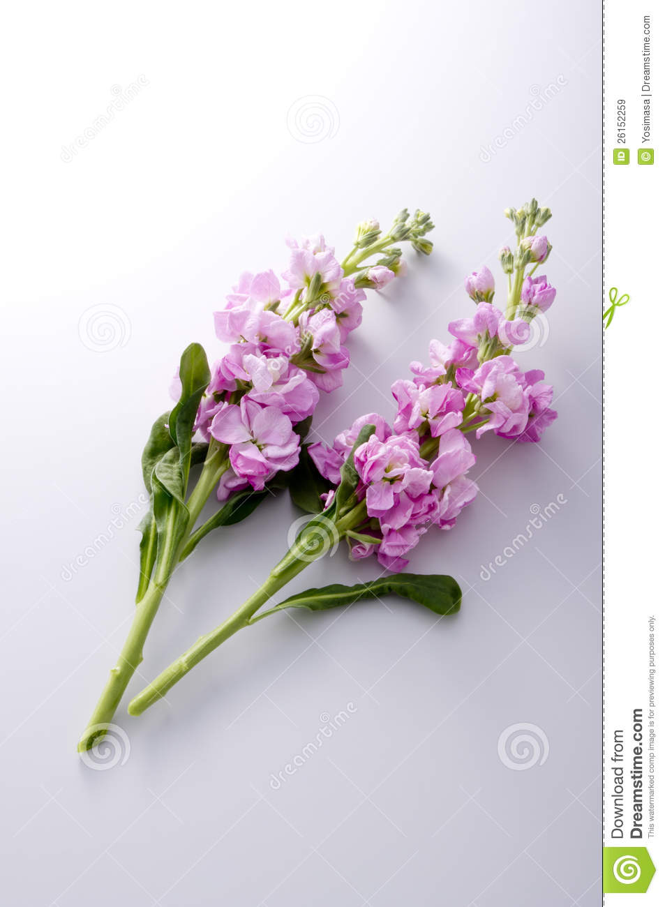 Stock Flower Stock Image Image Of Bunch Purple Natural 26152259