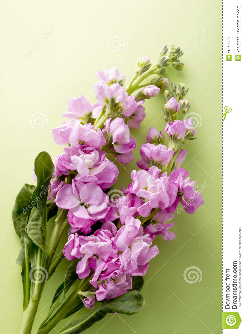 Stock Flower Stock Photo Image Of Bloom Background 26152268