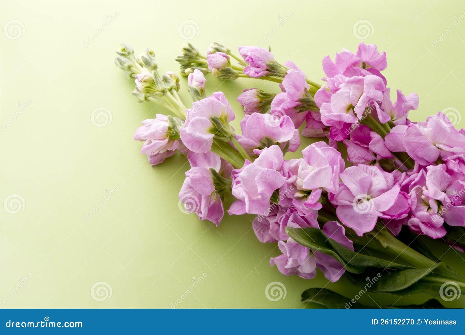 Stock Flower Stock Image
