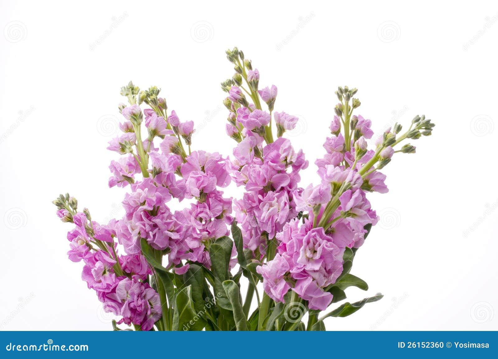 stock flower Gallery