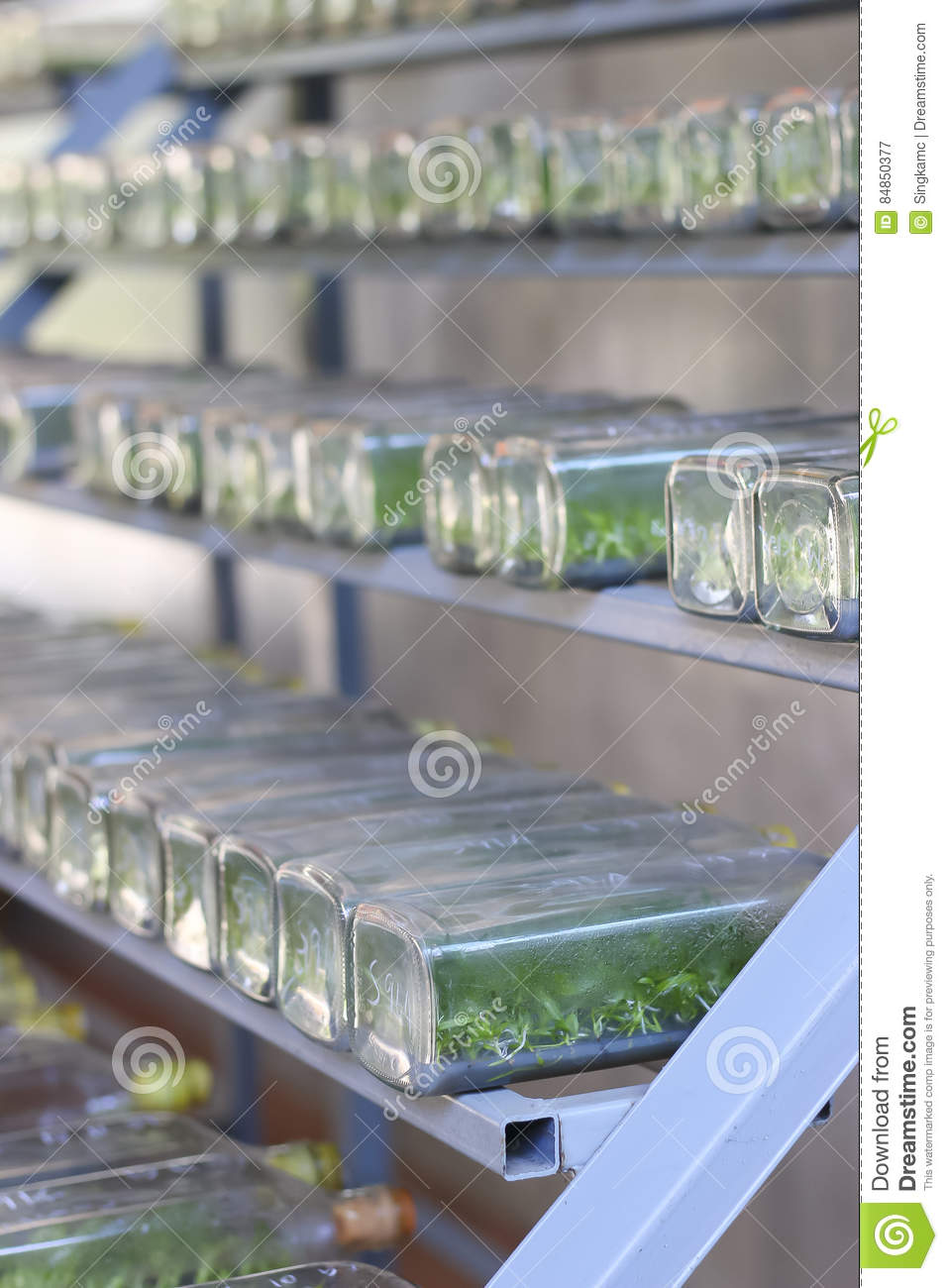 Stock Photo - Plant Tissue Culture Growing In A Bottle On