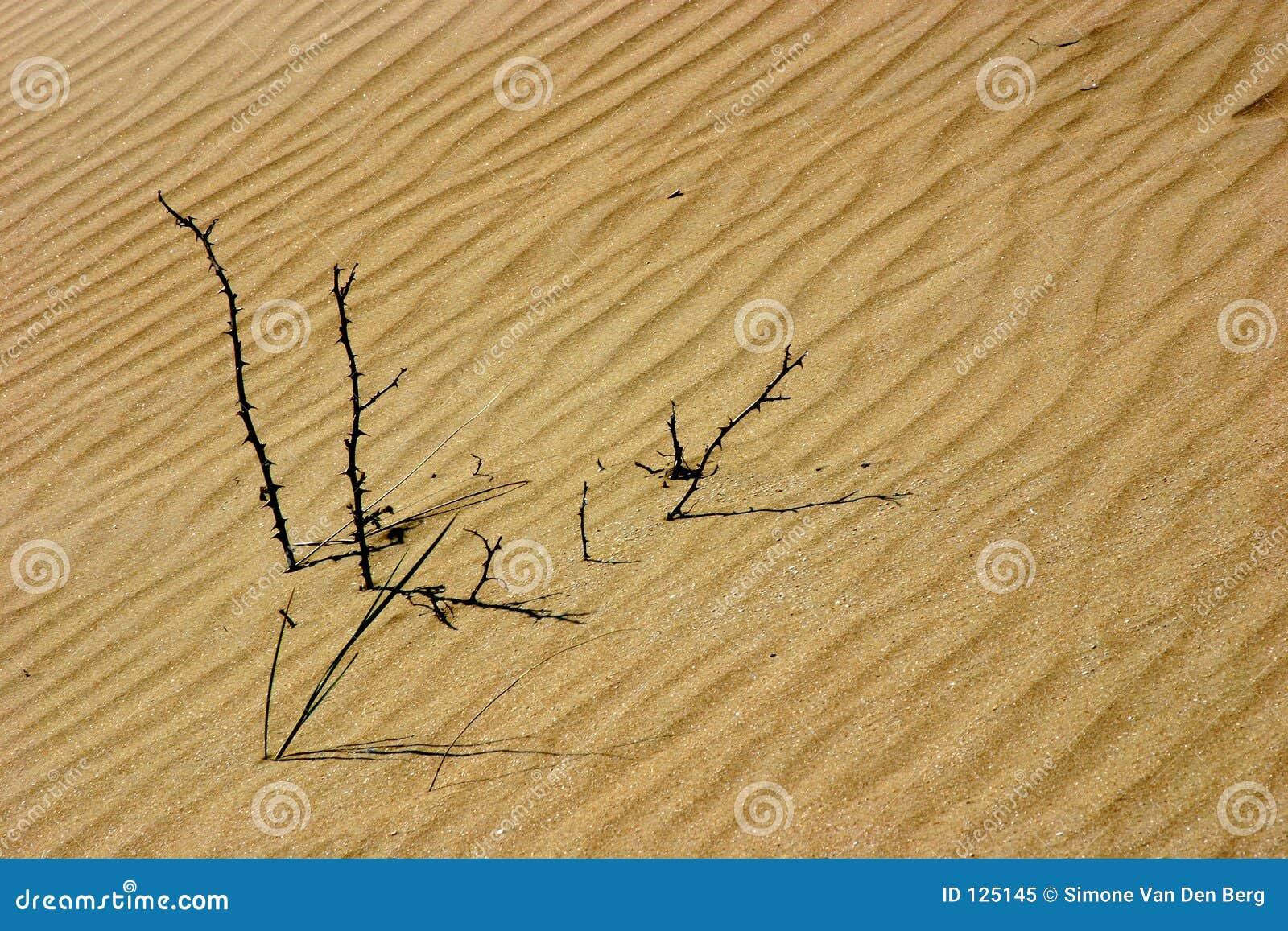 Stokken in de duinen