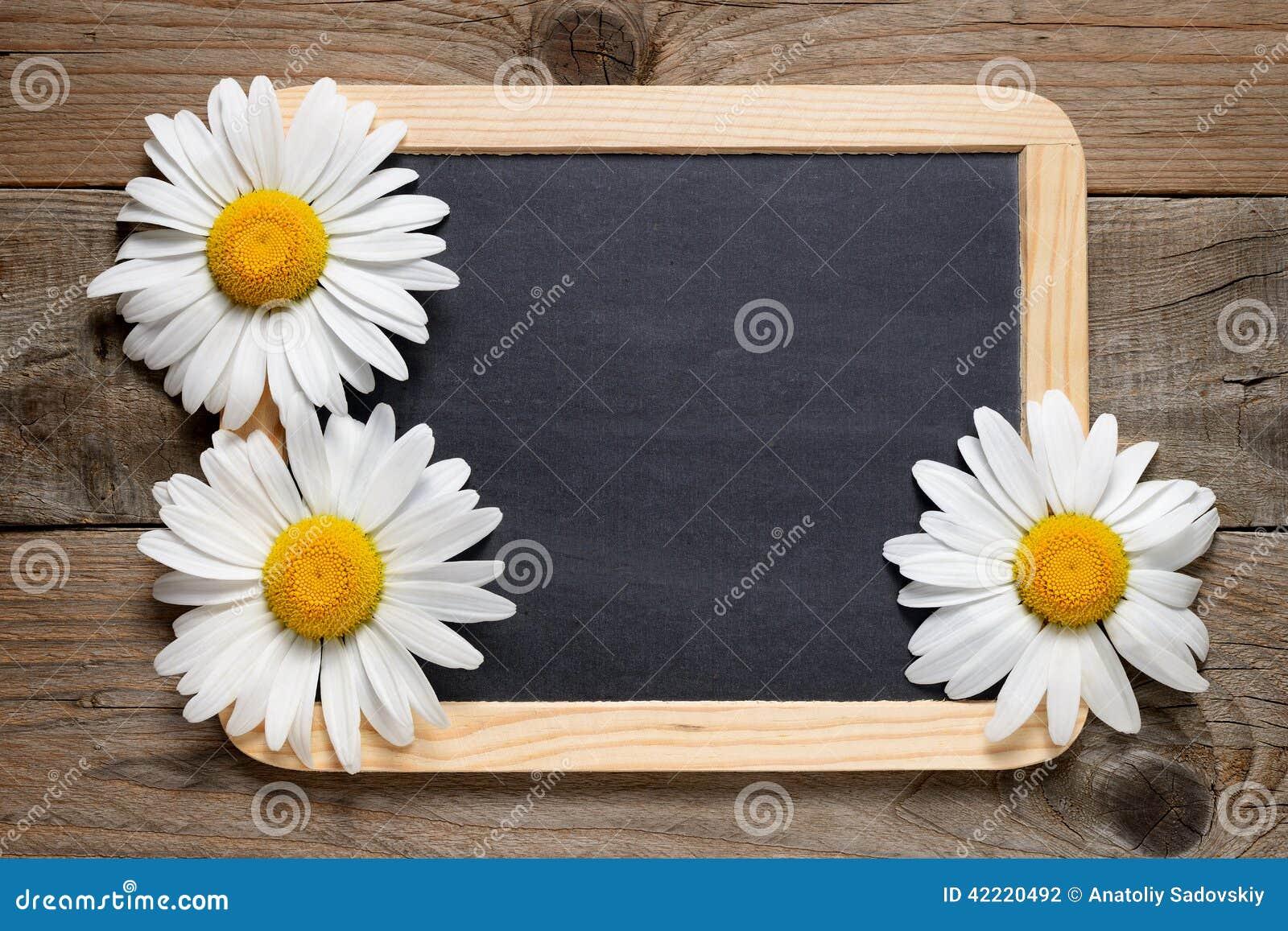 Stokrotki blackboard i kwiaty