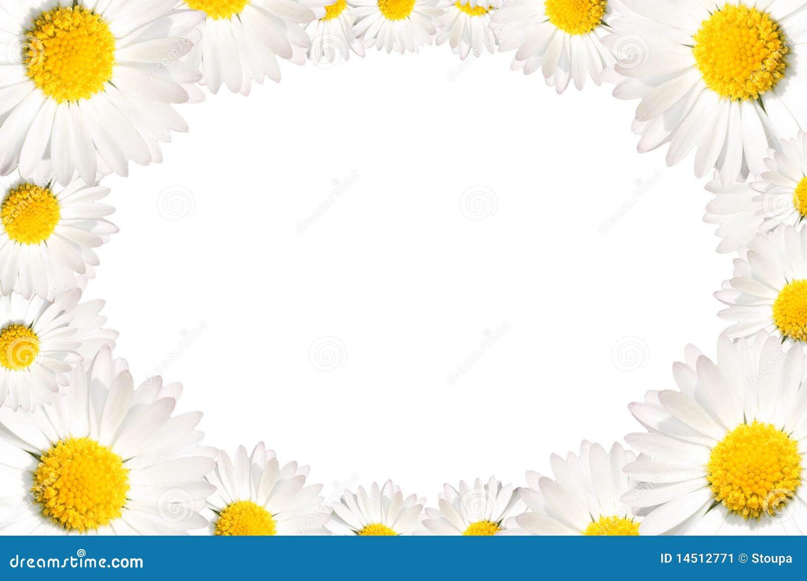 Stokrotki kwiatów rama