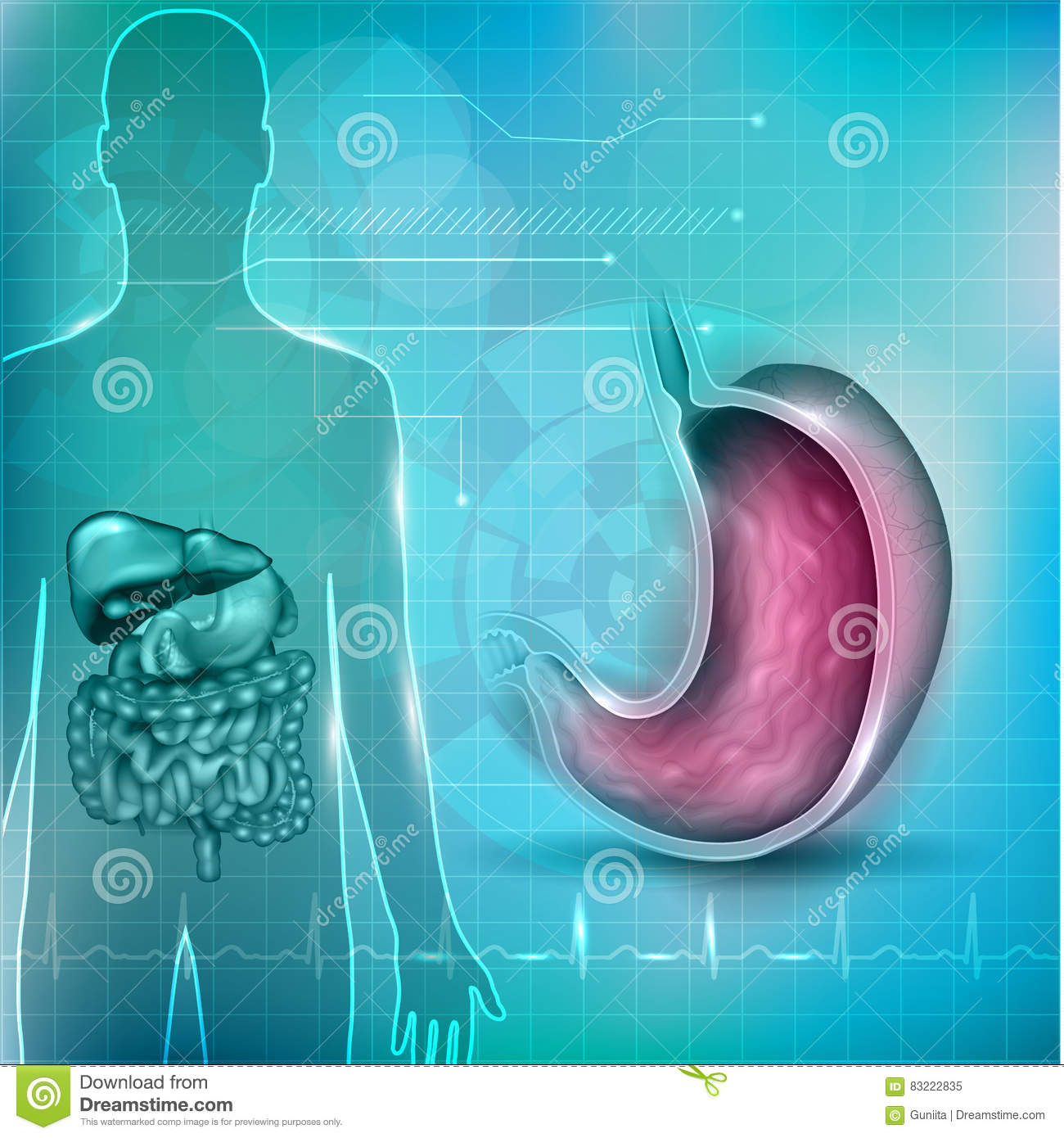 Stomach Cross Section Stock Vector Illustration Of Biology 83222835
