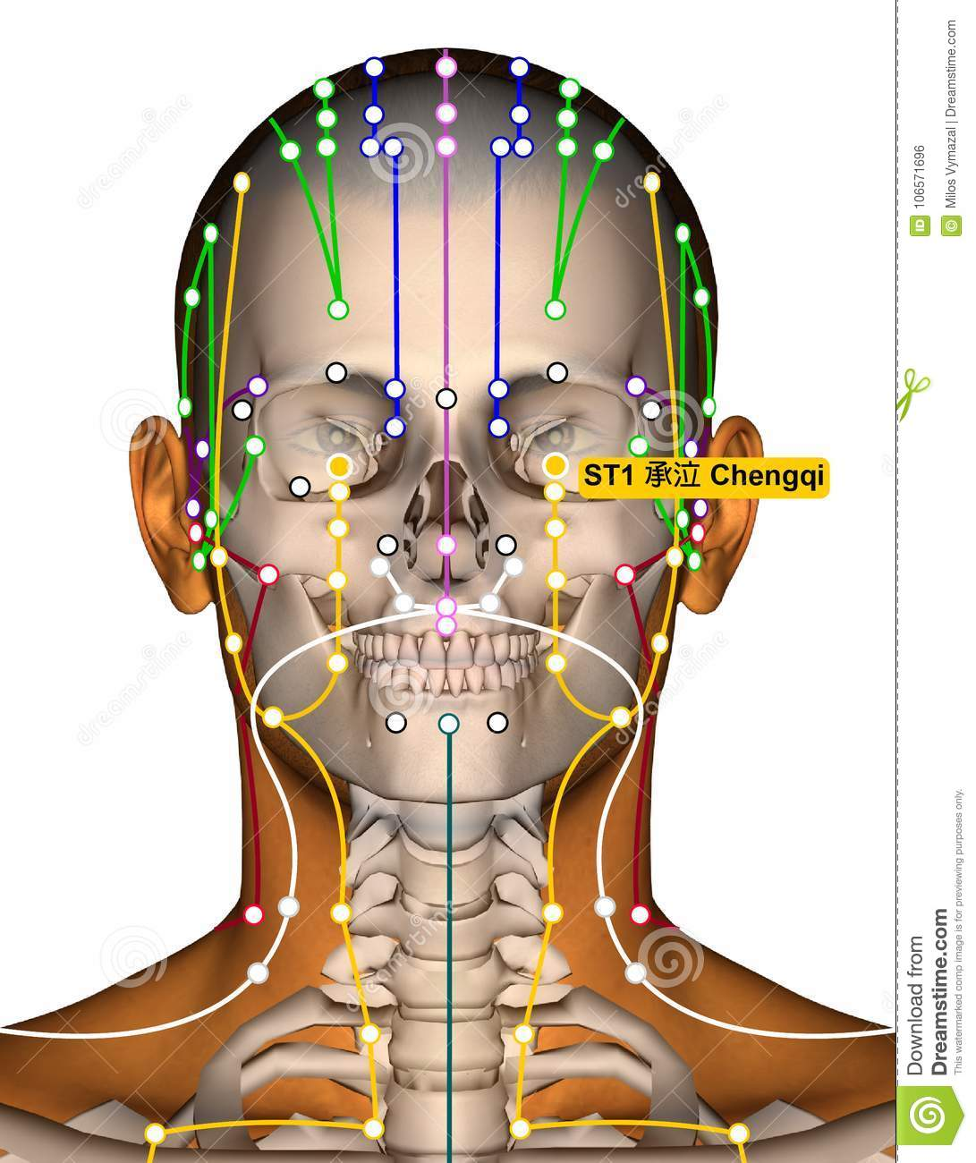 Acupuncture Point ST1 Chengqi, Stomach Meridian Stock ...