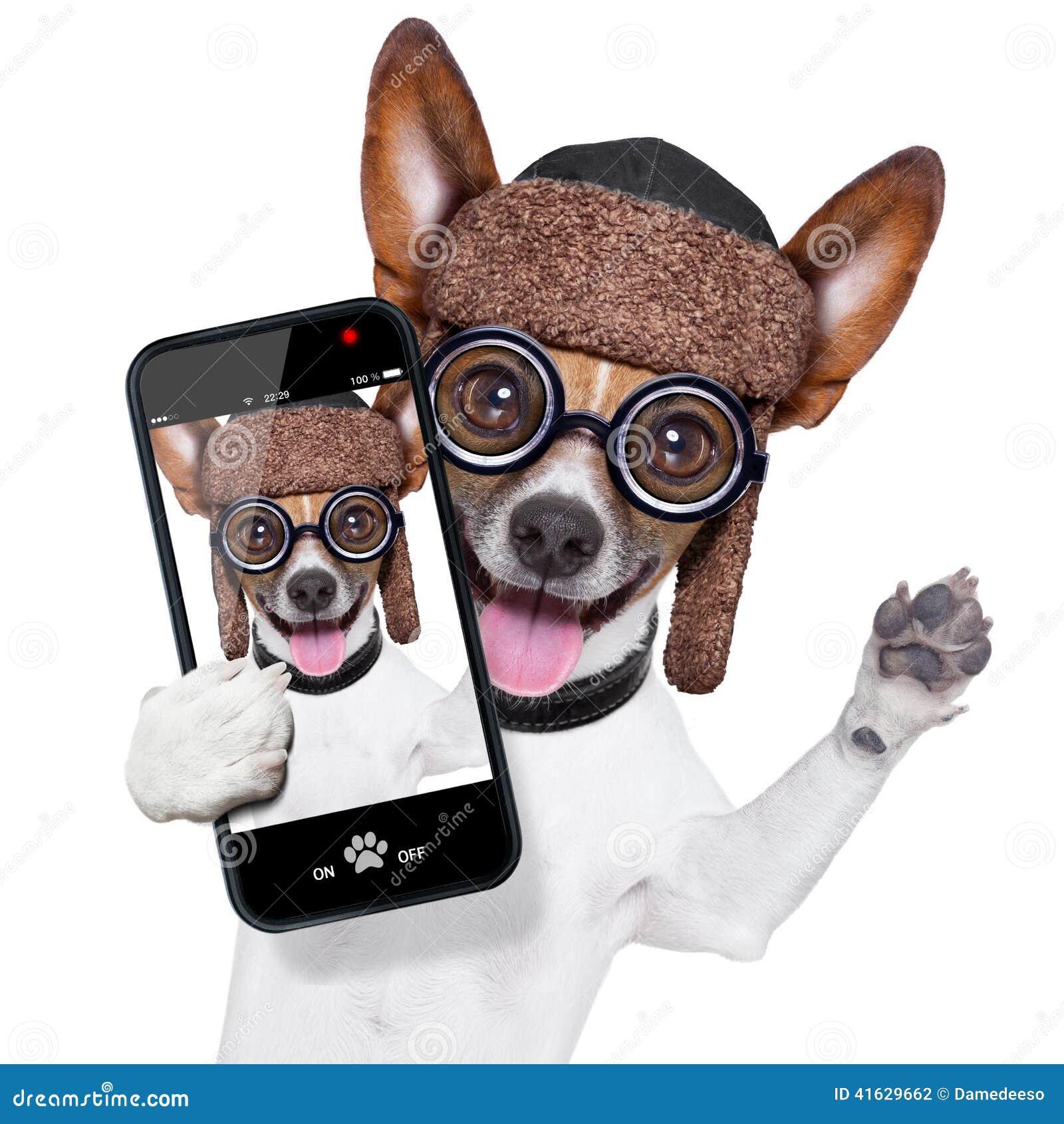 Stomme gekke hond selfie