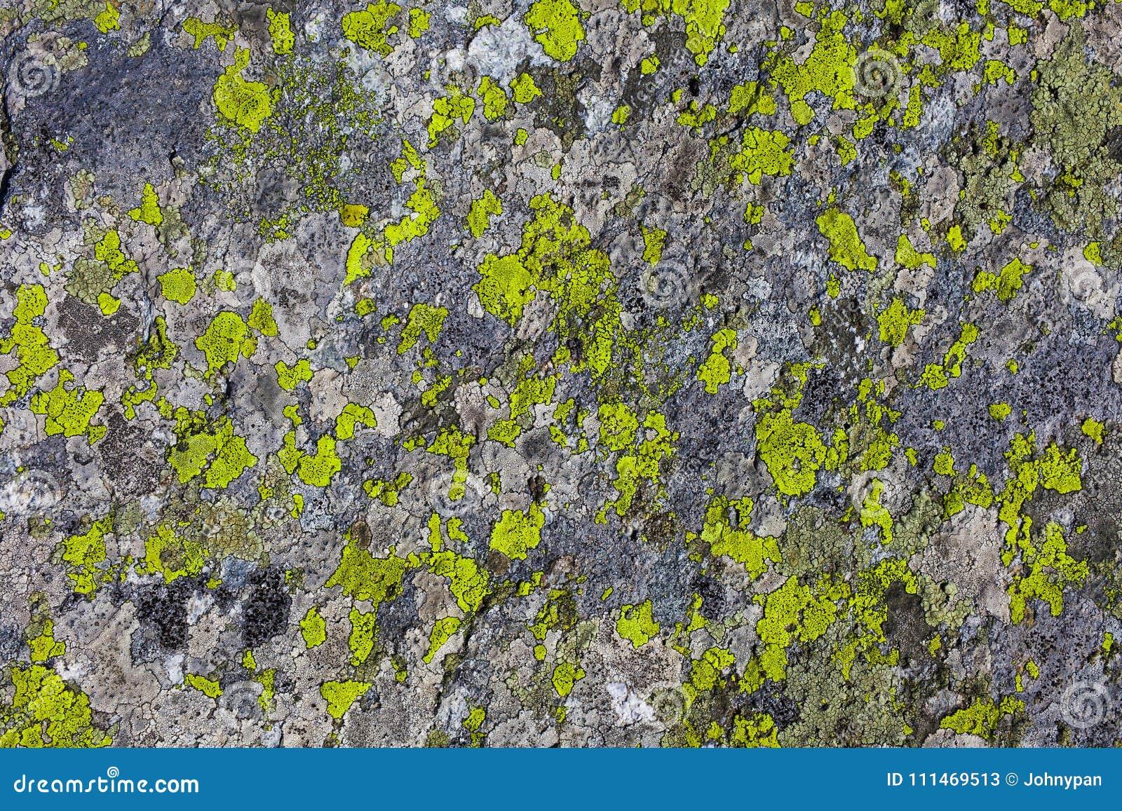 Stone ή βράχος με τη σύσταση εγκαταστάσεων βρύου
