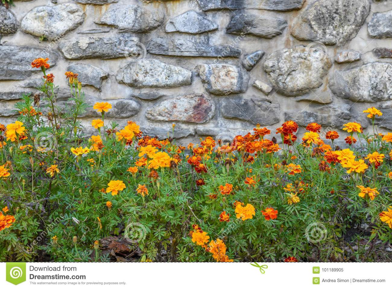 Stone background with flowers