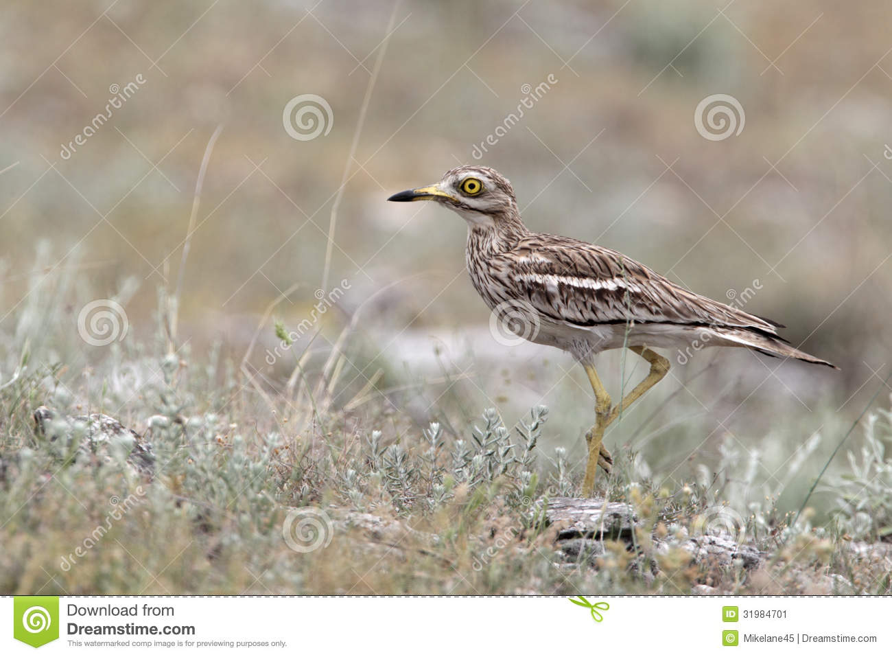 single men in curlew In curlew, wa, the median worker income is $43,611 this is higher than the national average of $29,701 the curlew, wa unemployment rate was 150%, as of the last census.