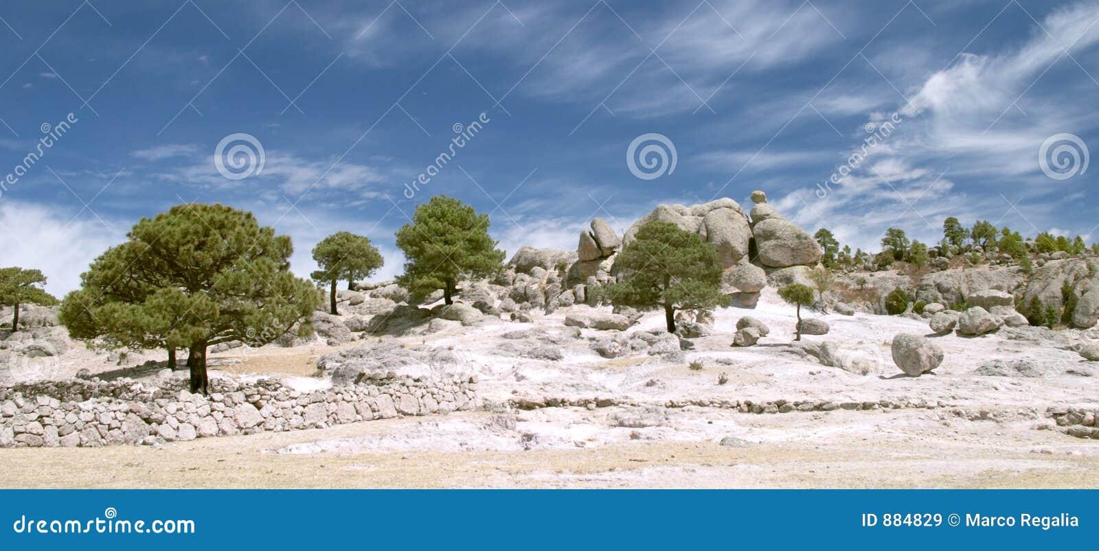 Stone dziwne drzewa