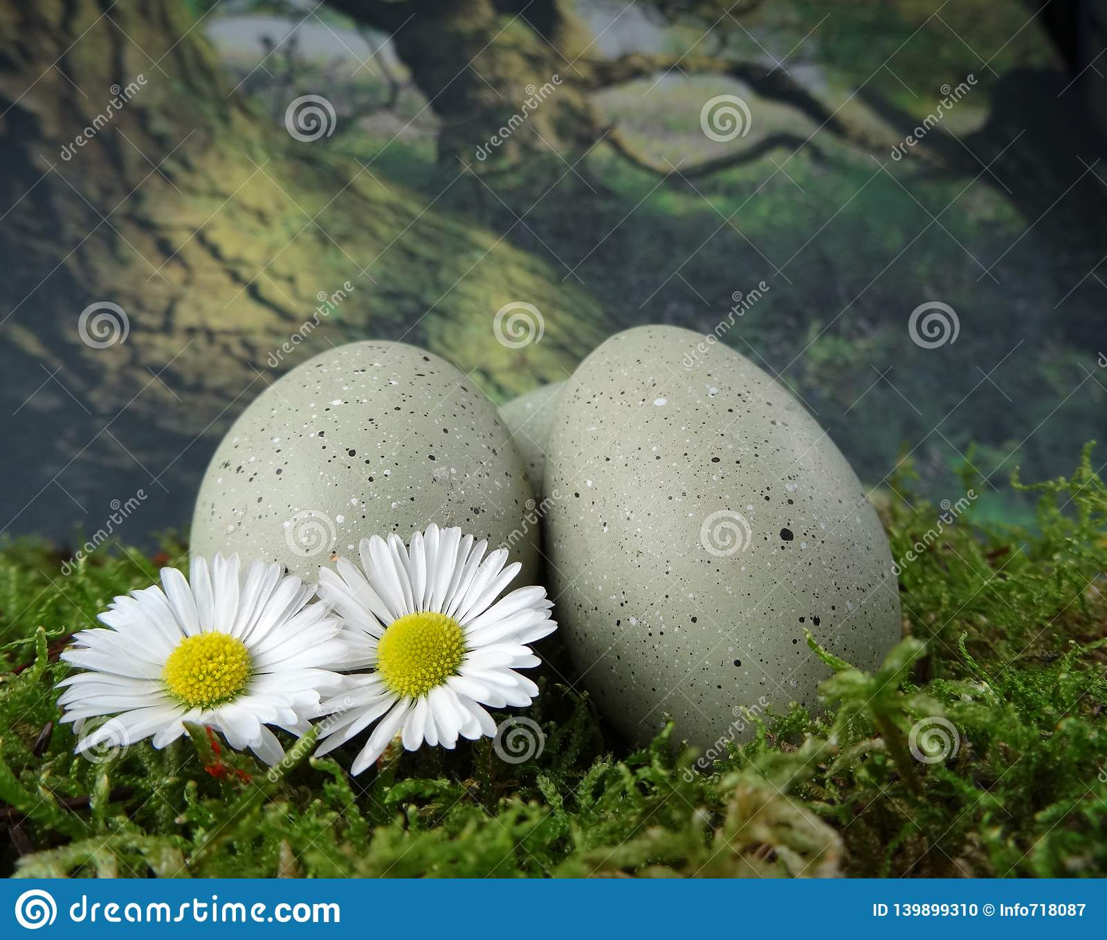 Stone eggs on natural moss ground with daisies