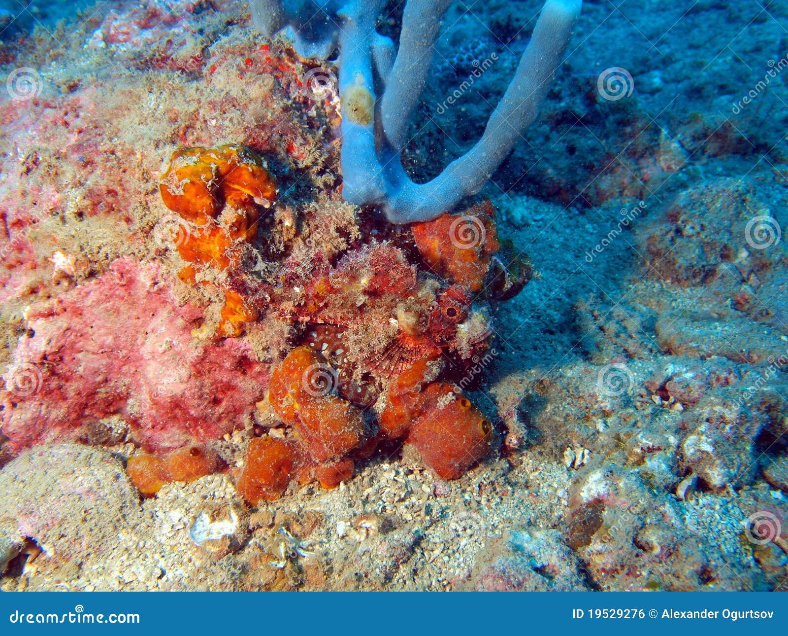 Stone-fish In An Ambush Royalty Free Stock Image - Image ...
