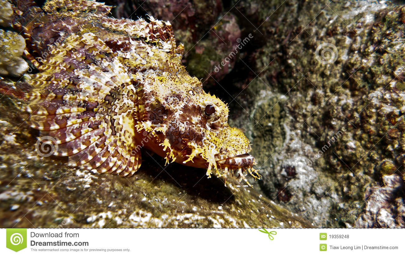 Royalty Free Stock Photos Stone Fish Camouflage Reef Image19359248 further Shiori Sushi Art also L rey Eel in addition Roller Coasters moreover Devil Is A Part Timer Wallpaper. on eel bite