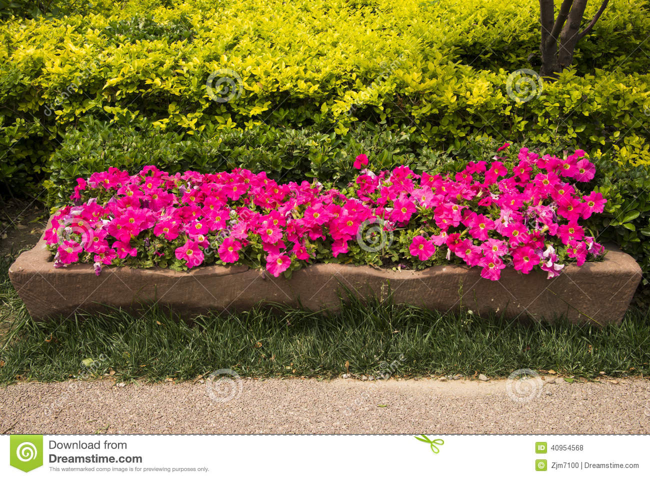 Stone flower bed flower stock photo image 40954568 for Green plants for flower beds