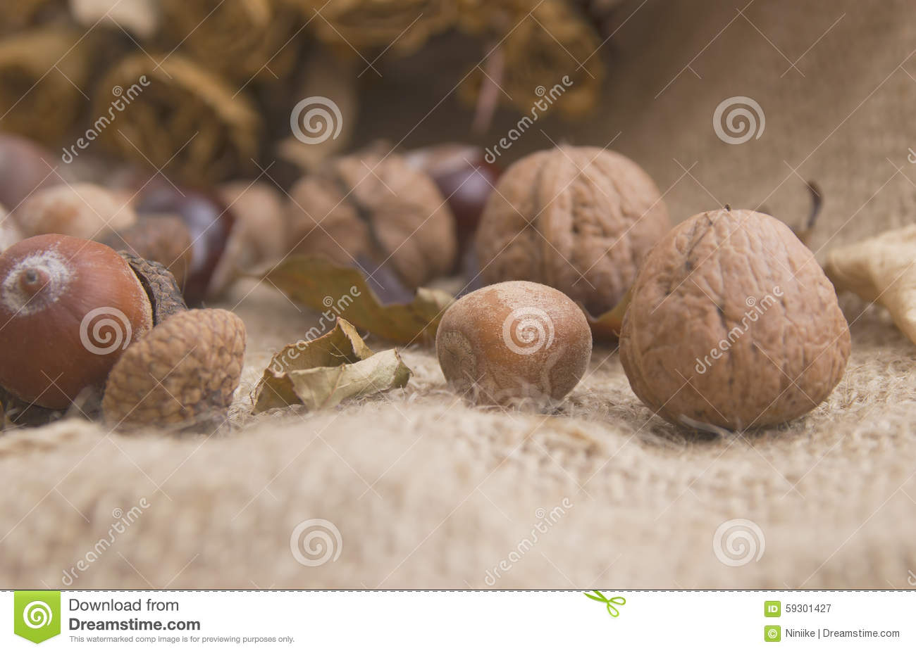 Stone fruits and dry flowers walnuts acorns chestnuts for How to preserve acorns