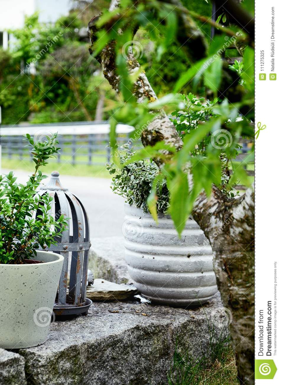Stone Garden Arrangement With Green And White Plants And Concrete Plant  Pots. Vertical, Close