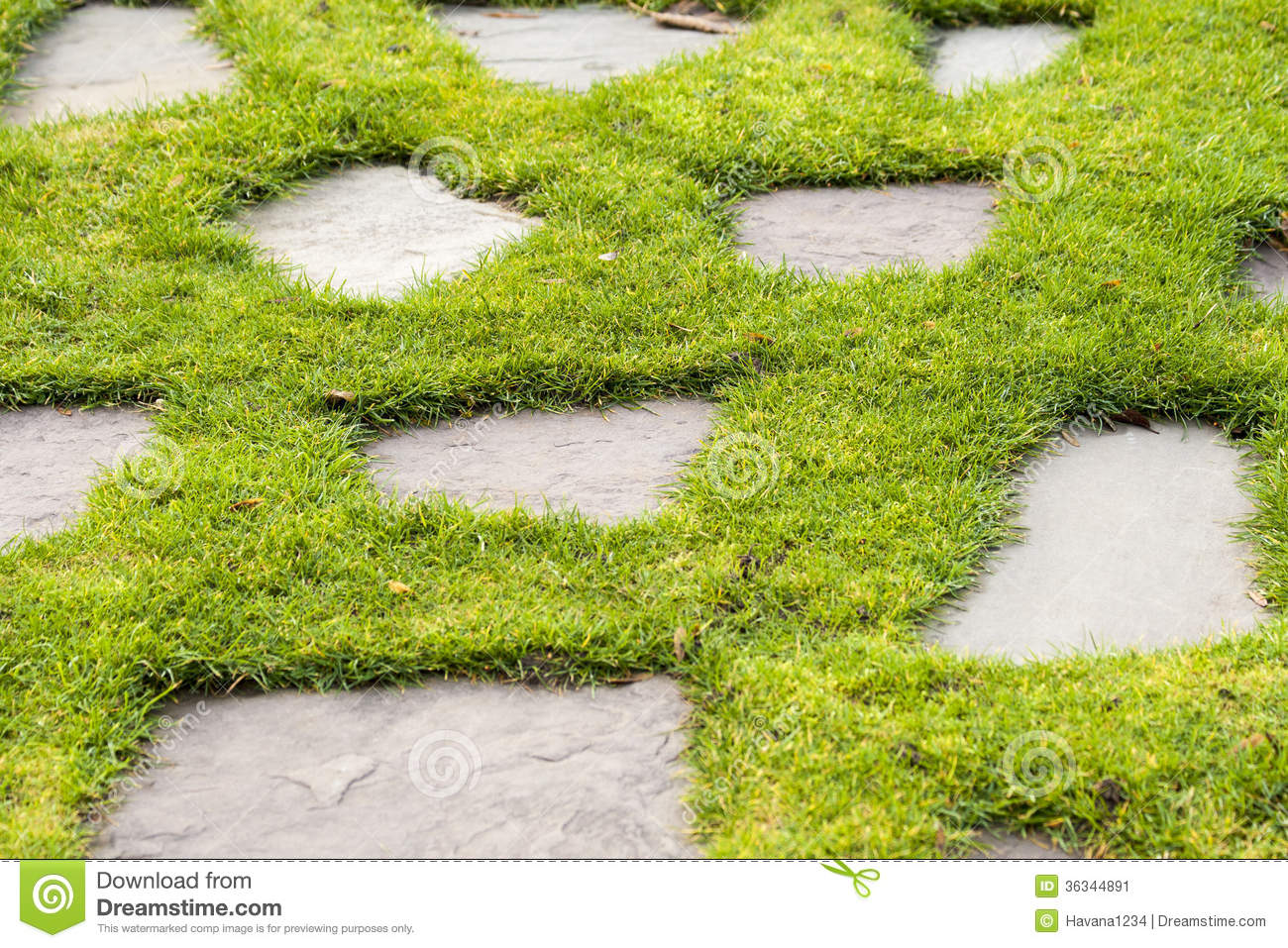 A stone path in the green grass park garden stock image for Stone path in grass