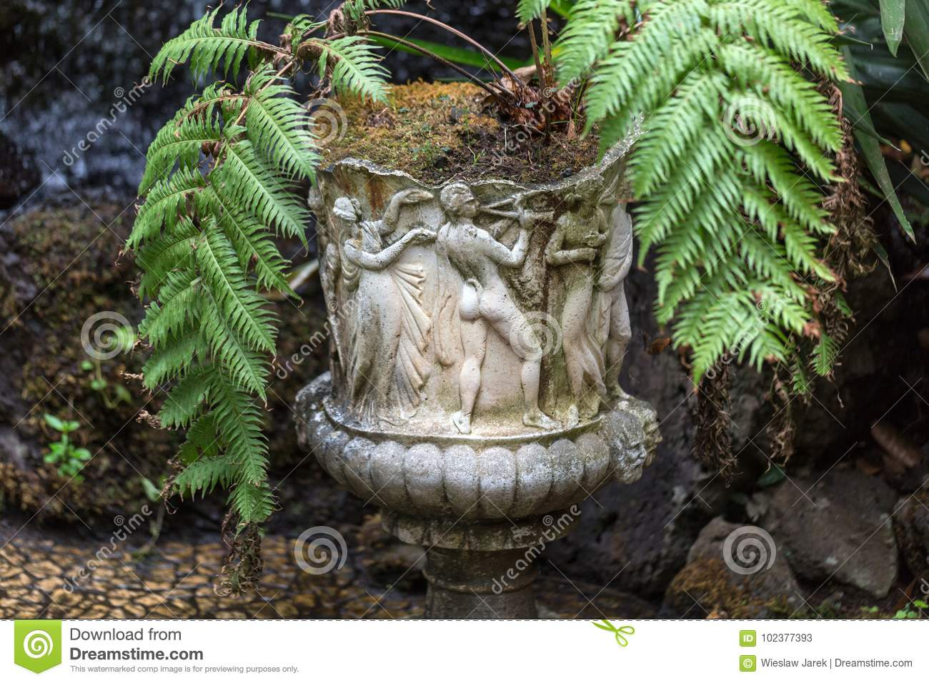 Charmant Download Stone Statues And Ferns In The Monte Palace Tropical Garden,  Funchal, Madeira Stock