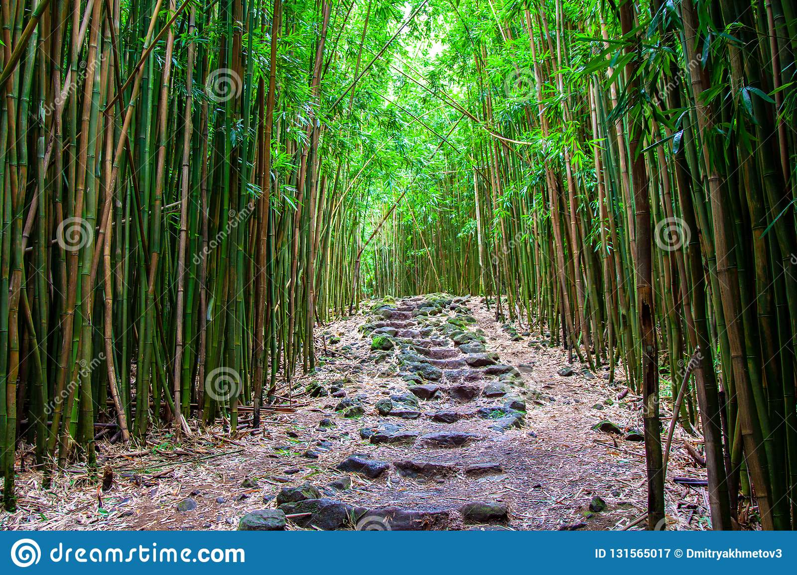 Stone steps at bamboo forest