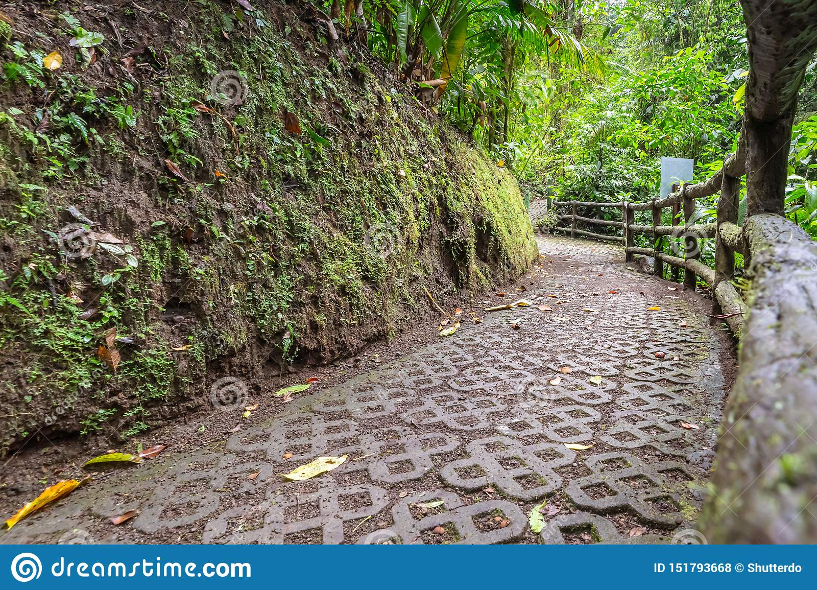 Stone walking path with tree branch railing through the rainforest
