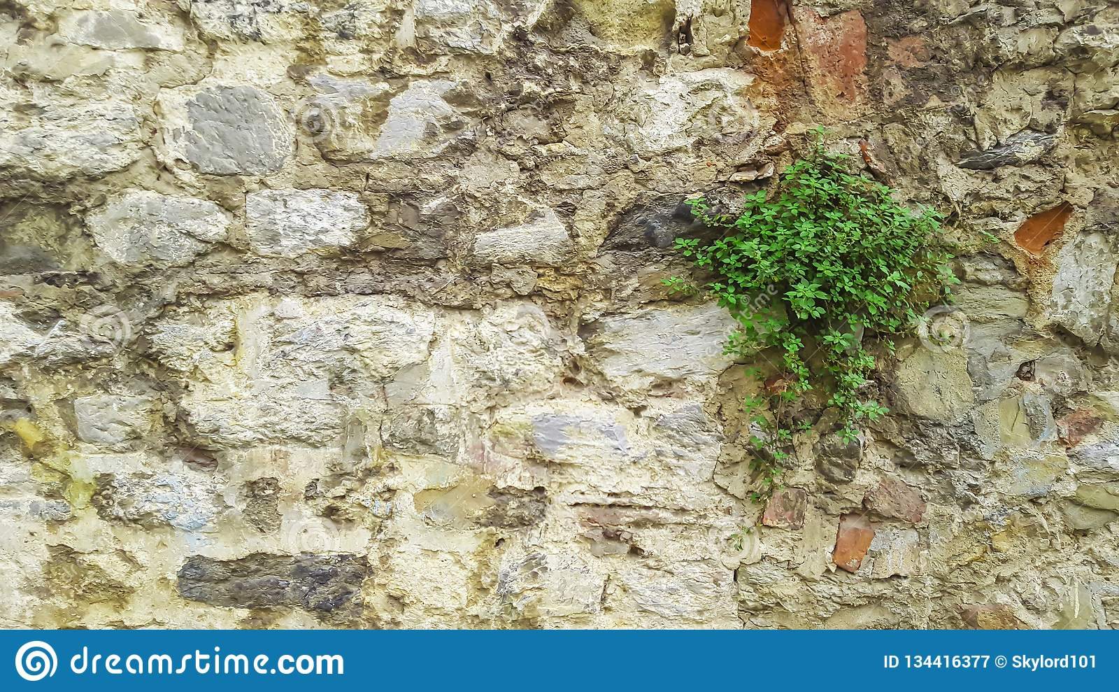 Stone wall with flower plant growing in foreground