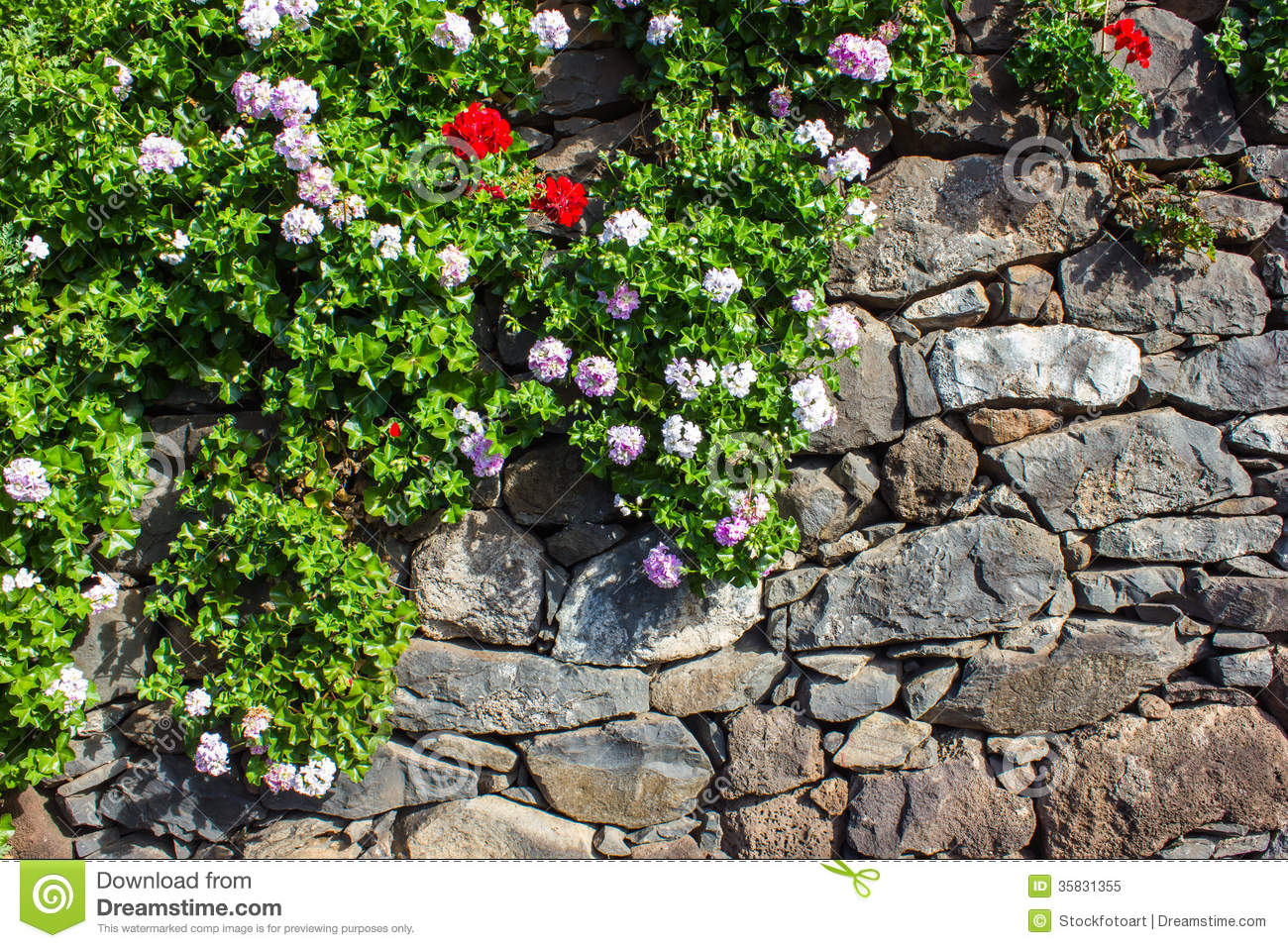 Stone wall with flowers stock image Image of modern