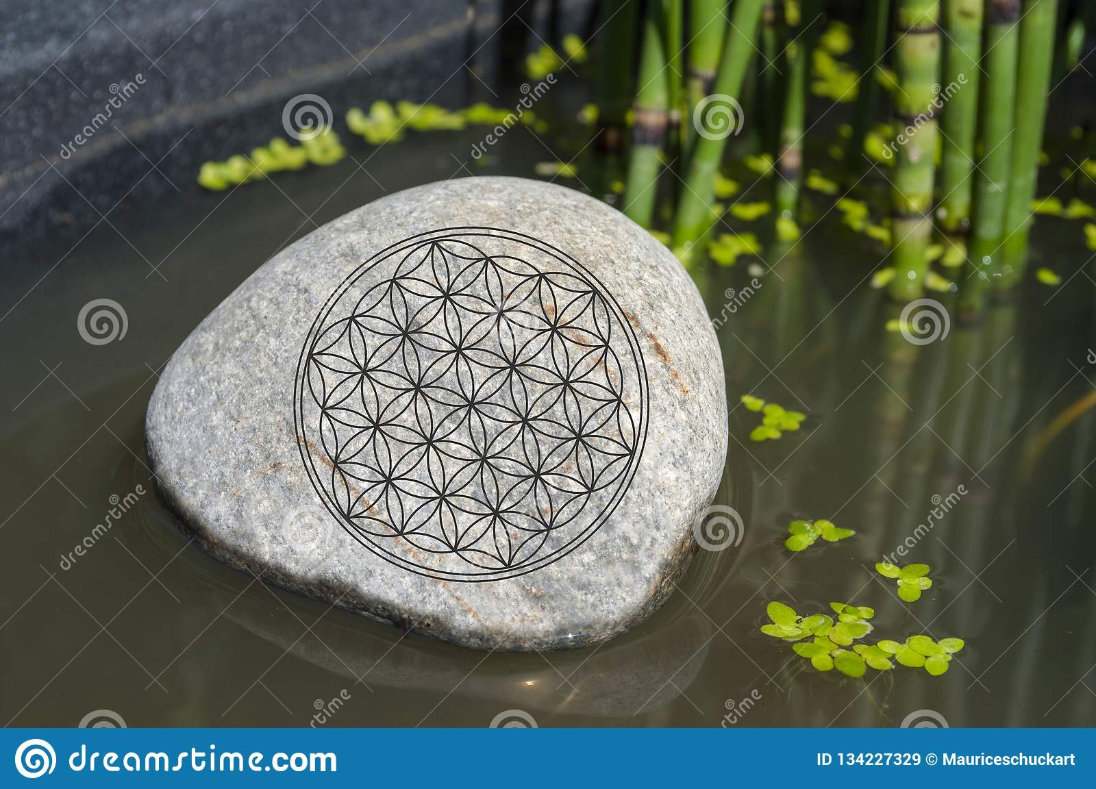 Stone in a forest with moss, sunlight with symbol Flower of Life