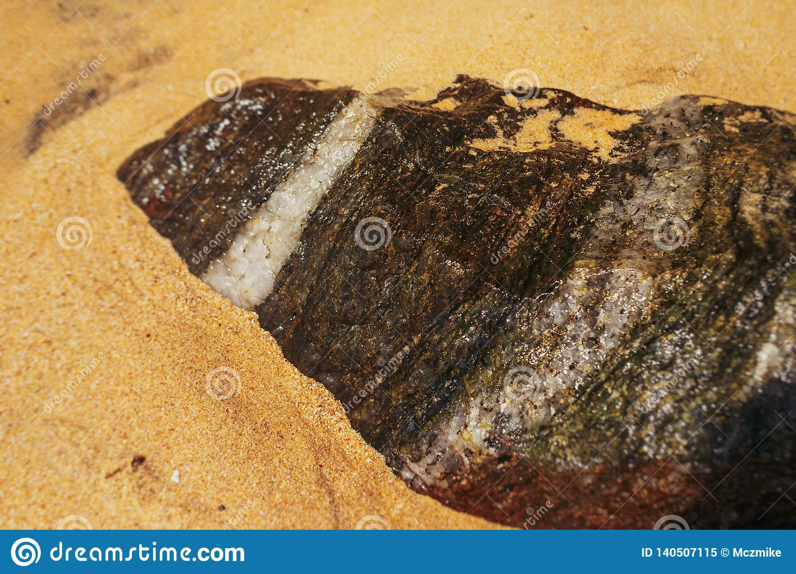Stone with white line on sand beach in Sri lanka
