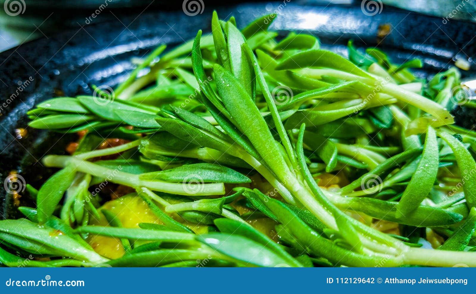 A Stonecrop Sedum Stock Photo Image Of Dish